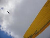 Curdin mit Adler Begleitung
